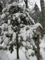 Portland Winter