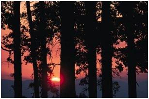 Suneset with Trees